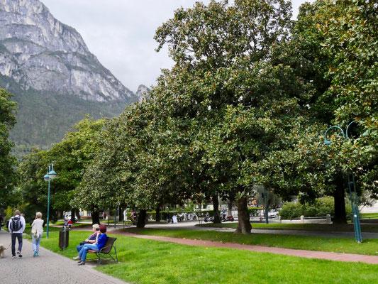 Magnolien Allee in Riva am Gardasee