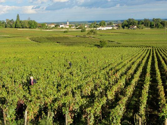 Frankreich Weinberge im Burgund  Frankreich Stadt und Gartenreise nach  Beaune im Burgund