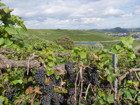 Ahrtal, Weinberge Rotwein