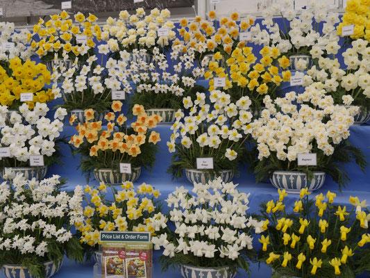 Chelsea Flower Show Narzissen