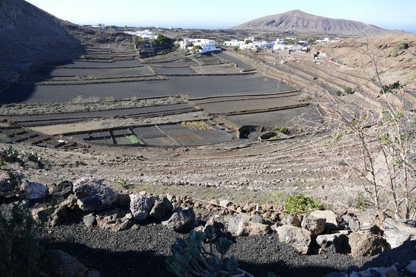 Gemüseanbau im Vulkanfeld Lanzarote