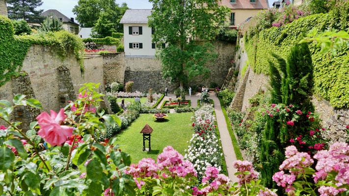 Eltville im Rheingau, Rosarium im Burggraben