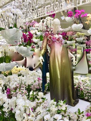 Orchideen Schau auf dem Keukenhof Sehenswürdigkeit  Blumenfestival Keukenhof Holland Frühlingsblüten