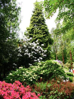 Gartenreise England Sehenswürdigkeiten Dottington Place and Gardens