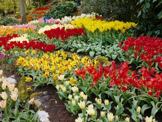 Tulpenbeete Keukenhof Holland