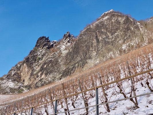 Drachenfels im Siebengebirge Weinberge