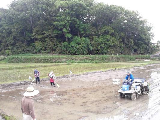 地域の方々と共に田植えをしました。