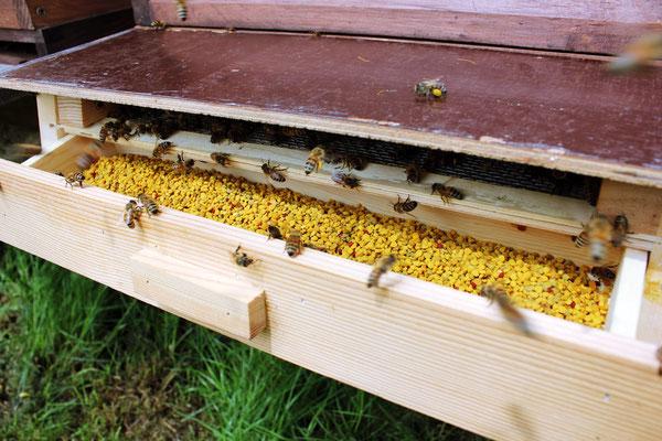 ...und streifen dabei den mitgebrachten Pollen ab