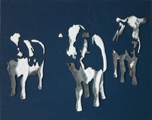 24,5x30,5 koeien
