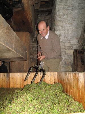 Senior Wolfram König beim Auflockern der Trauben