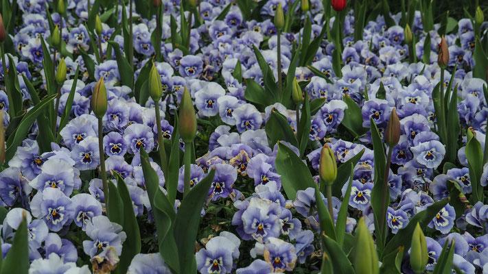 Bild: Blütenpracht