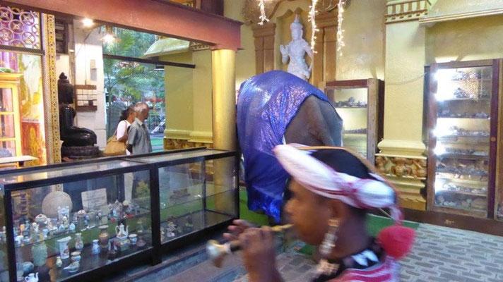 Bild: Elefant im Tempel