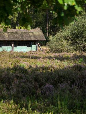 Bild: Bienenstände in der Lüneburger Heide