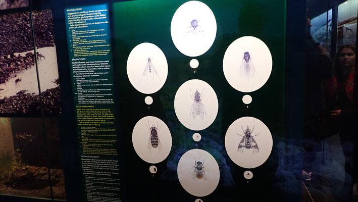 Bild: Stechmücken