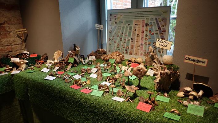 Pilzausstellung