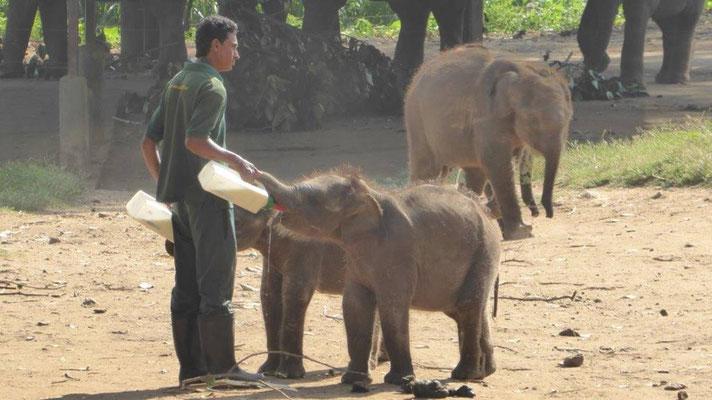 Bild: Elefant bekommt die Flasche zum Trinken