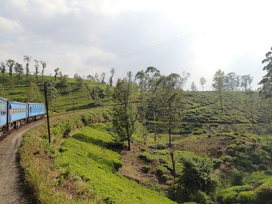 Bild: Teeplantagen an der Bahnstrecke