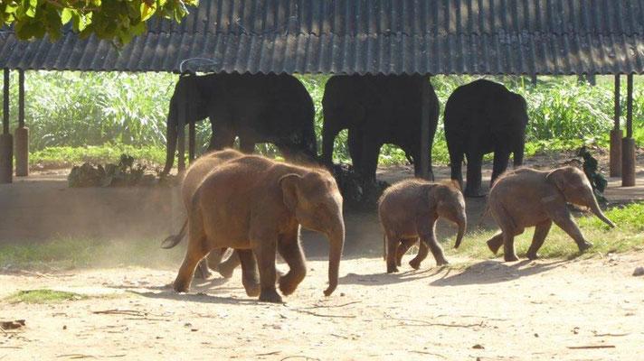 Bild: Elefanten im Waisenhaus