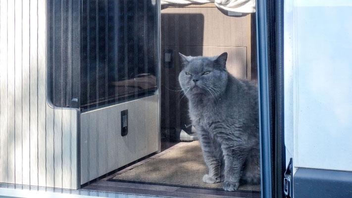 Bild: Unsere Katze