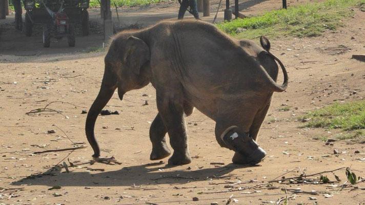 Bild: Elefant macht sich auf den Weg