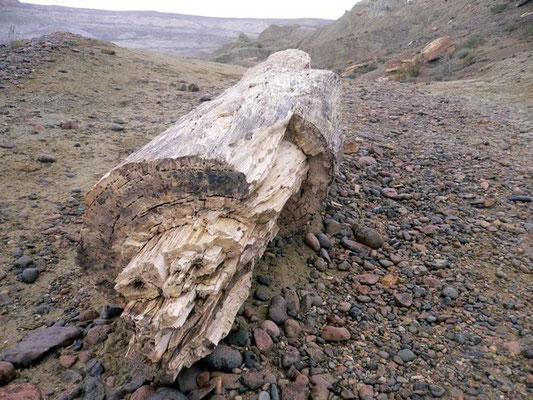 Bild: Fossil