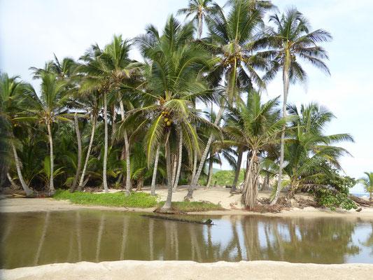 Bild: Palmen am Meer von Tayrona