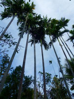 Bild: Palmengipfel