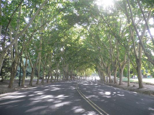 Bild: Straße im Park