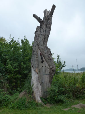 Bild: Alter Baum