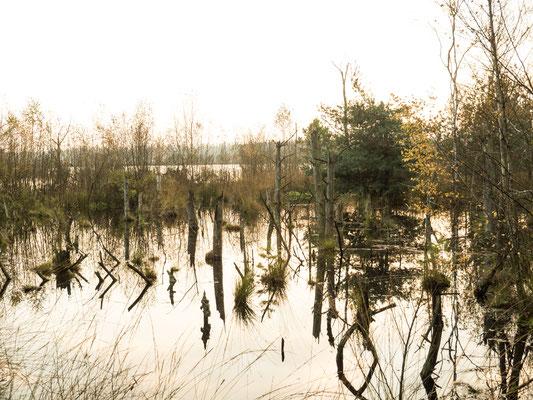 Bild: Tister Bauernmoor - Foto 1