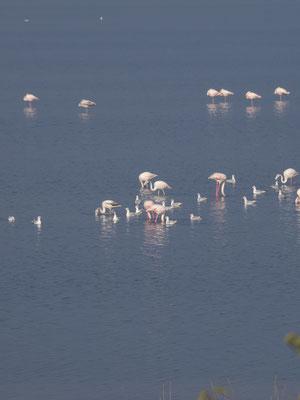 Bild:  Vögel am Wasser - Foto 3