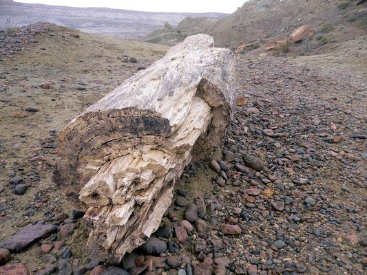 Bild: Versteinerter Baumstamm