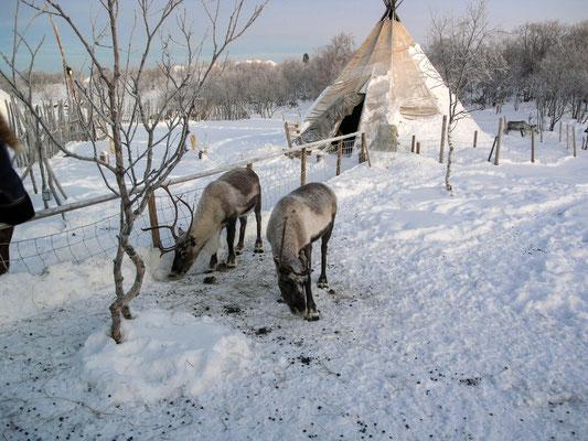 Bild: Snow Hotel - Foto 2