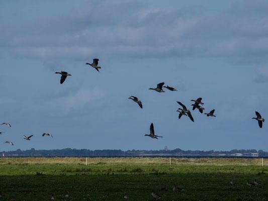 Bild: Vögel am Himmel