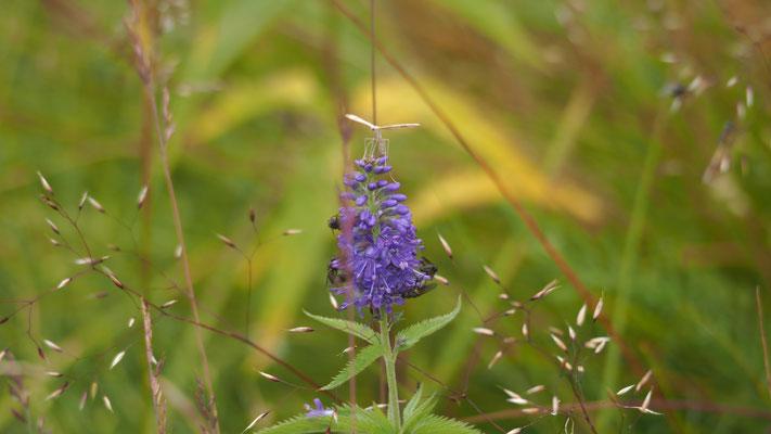 Bild: Blume