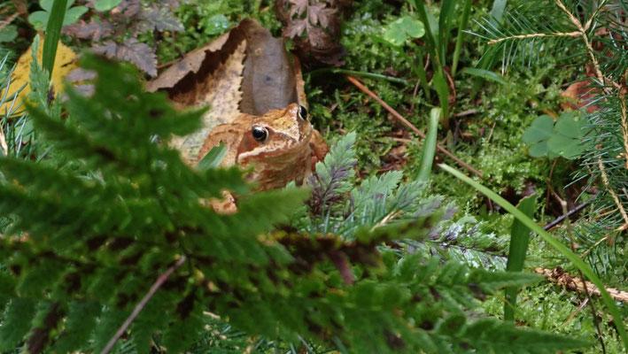 Bild: Ein Frosch!