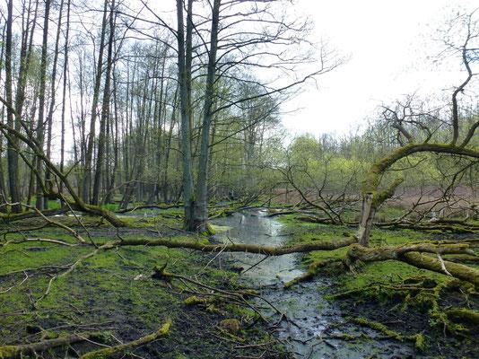 Bild: Wasser und Wald