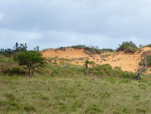 Bild: Die roten Dünen im Wetland Park