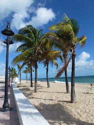 Bild: Palmen und Strand
