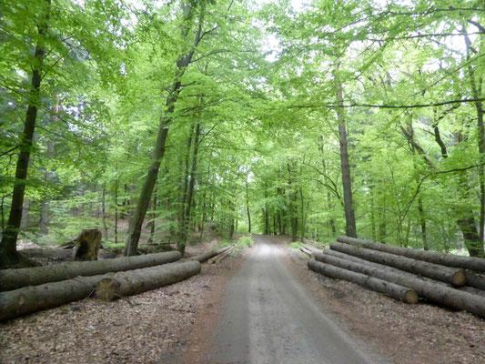 Der Wald im NSG