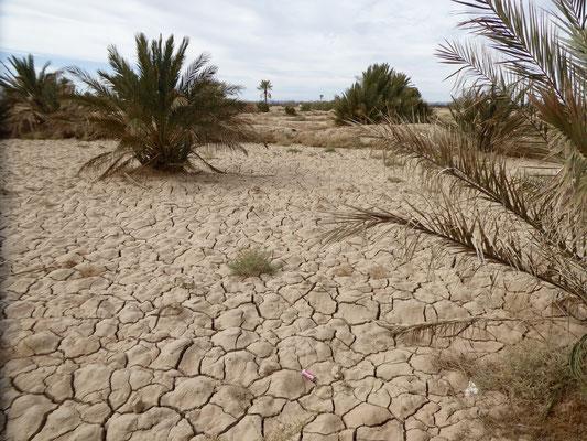 Bild: Die Wüste um Rissani in Marokko