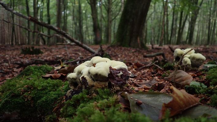 Bild: Pilze