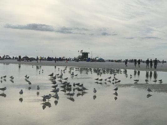 Bild: Auf dem Weg zu Strand und Meer muss man erst einmal durch flaches Wasser
