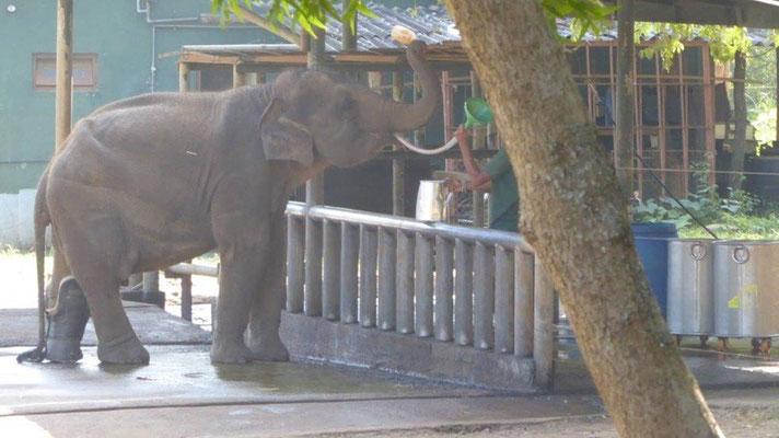 Bild: Elefant am Zaun