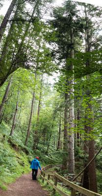 Bild: Wanderung Finn Falls