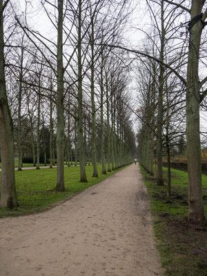 Bild: Weg durch den Französischen Garten in Celle
