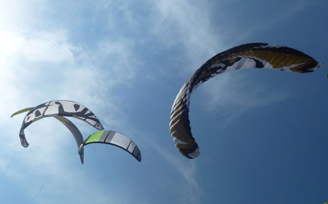 Bild: Fliegende Kites in St. Peter-Ording