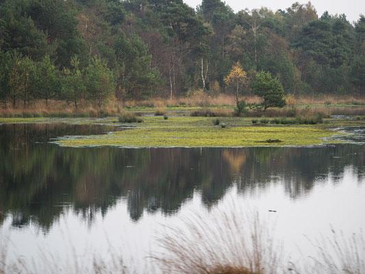 Bild: Tister Bauernmoor - Foto 4