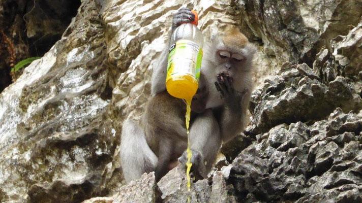 Bild: Ein Affe macht sich über eine geklaute Getränkeflasche her.