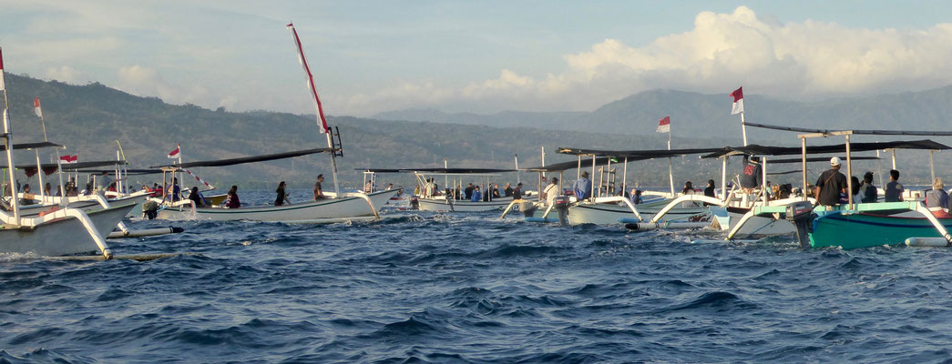 Bild: Ca. 50 Boote auf der Suche nach Delphinen in der Bucht von Lovina auf Bali